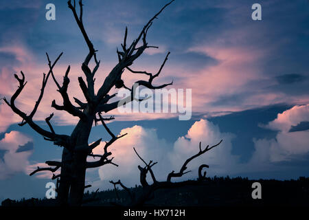 View of dead tree and sunset  from Bright Angel Point. North Rim of Grand Canyon National Park, Arizona - Stock Photo