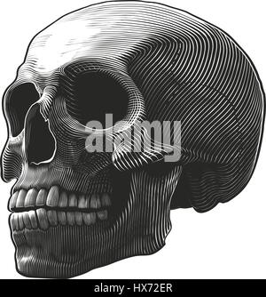 Human skull in woodcut style - Stock Photo