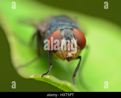 Close Up Of Flie - Stock Photo