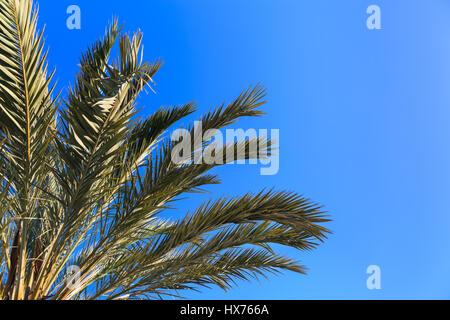 Palm trees against deep blue sky - Stock Photo