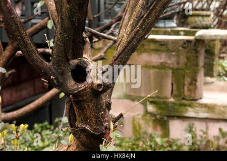 A tree on a city block in Chicago, IL - Stock Photo