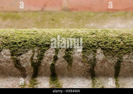 Moss growing on the concrete molding on the exterior of a building - Stock Photo