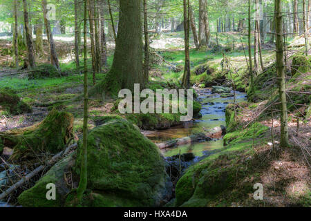 Idyllic Bavarian Forest - Stock Photo