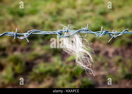 Sharp twisted metal barbs of barbed wire fence line Stock Photo ...