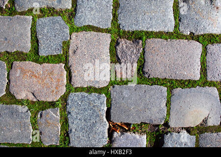 Frontal view of authentic cobbled gray stone pavement with square rock tiles in rows and green moss between the - Stock Photo