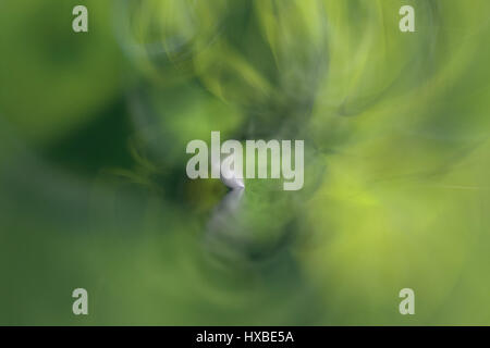 Green abstract background lines and angles blurred  - Stock Photo