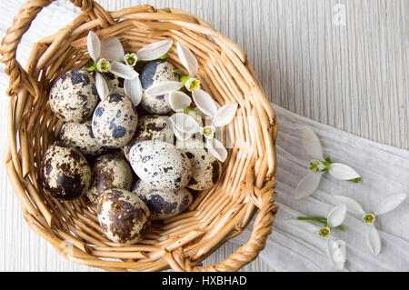 Quail eggs and white snowdrop flowers in a basket - Stock Photo