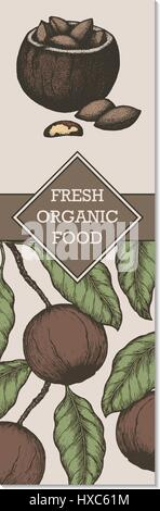 Vector banner with hand drawn branch of of Brazil nuts. - Stock Photo