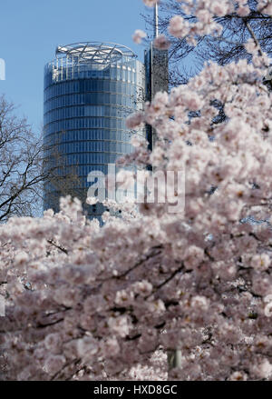 Essen, Germany. 28th Mar, 2017. Headquarters of energy company 'Innogy' hidden behind cherry blossom trees in full - Stock Photo