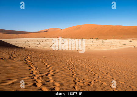 Dead Camelthorn Trees and red dunes in Deadvlei, Sossusvlei, Namib-Naukluft National Park, Namibia - Stock Photo