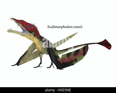 The carnivorous Eudimorphodon was a pterosaur flying reptile that lived in Italy in the Triassic Period. - Stock Photo