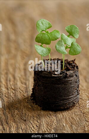 Small green sprout tending to sun spring  macro - Stock Photo