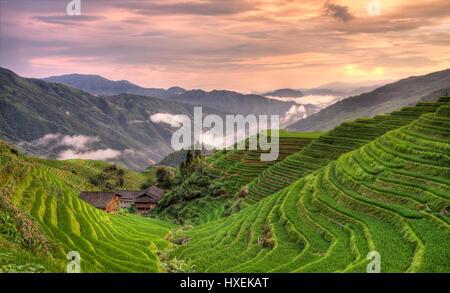 pingan sunset longji rice terraces - Stock Photo