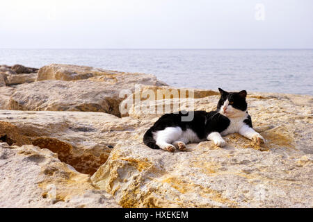 Black and white street cat laying on rocks with  background of sea. - Stock Photo