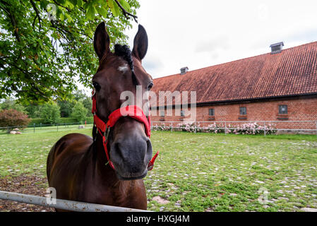 stud in Masuria in Poland - Stock Photo
