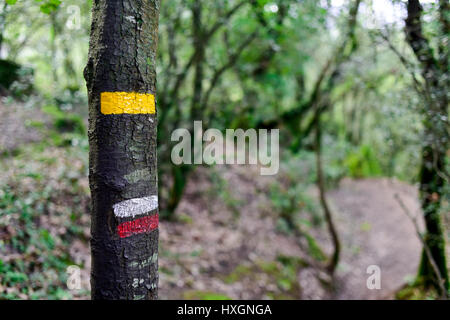 a yellow mark for a local path and the characteristic white and red stripes of a GR path marked in a tree in the - Stock Photo