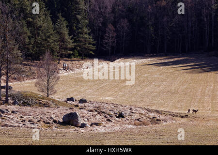 Countryside in Bogesundslandet, near Vaxholm, Sweden - Stock Photo
