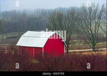 Red barn on a hillside near Ludington, Michigan, USA. Photography by Jeffrey Wickett, NorthLight Photography.  https://northlight.blog/ - Stock Photo