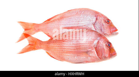 Fresh snapper fish isolated on white. - Stock Photo
