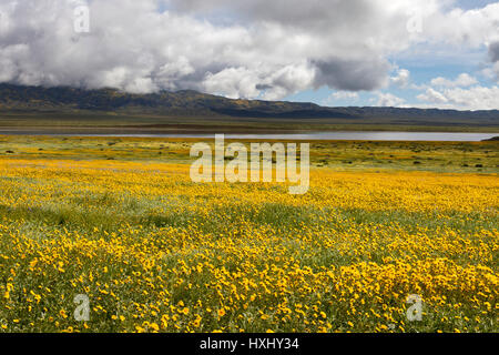Wildflowers bloom in the low lying hills surrounding Soda Lake in California's Carrizo National Monument - Stock Photo