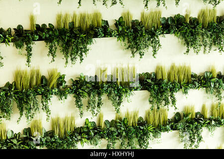 A shelf and a plant,the plants on the shelves - Stock Photo