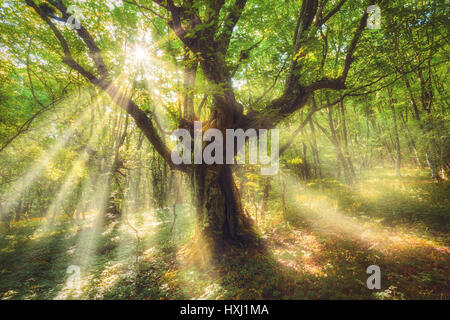 Fairy old tree tree with colorful sun rays in spring morning. Fantastic landscape with dreamy forest and green leaves - Stock Photo