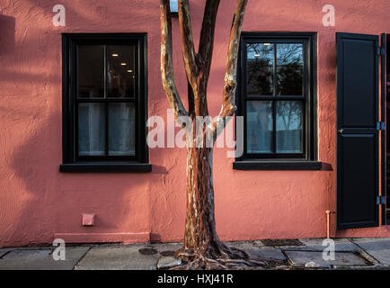 Windows of a peach colored house and a Crape Myrtle tree trunk in Charleston, South Carolina, Usa - Stock Photo