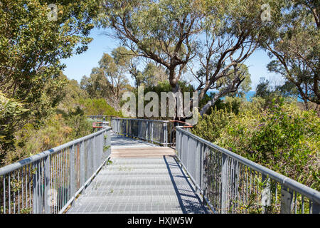 Metal walkway through the tree tops at Bold Park with a hint of the Indian Ocean under a blue sky in City Beach, - Stock Photo
