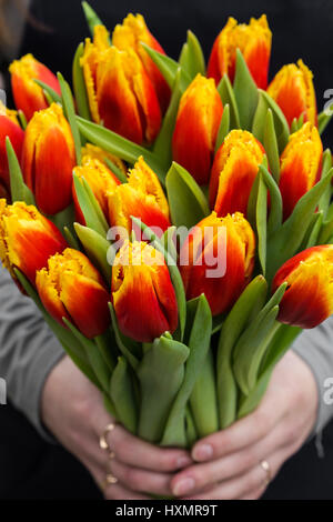 Young oman holding tulips. Gift card template, poster or greeting card - woman holding bouquet of tulips.Mother's - Stock Photo
