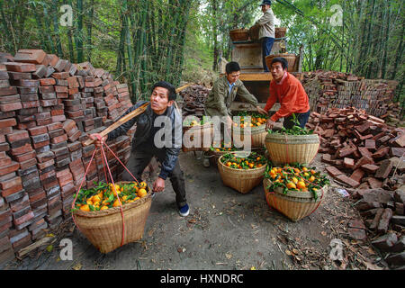 YANGSHUO, GUANGXI, CHINA - MARCH 29: Fruit business in south-western China, March 29, 2010. Chinese farmer transports - Stock Photo