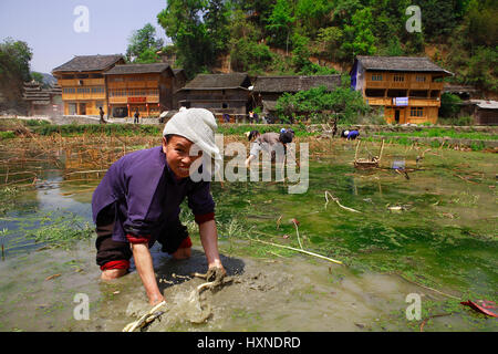 GUIZHOU PROVINCE, CHINA - APRIL 8: Dong ethnic woman working in rice field near Zhaoxing Dong Village, Southwest - Stock Photo