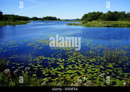Asnen, Seenlandschaft in Schweden - Stock Photo