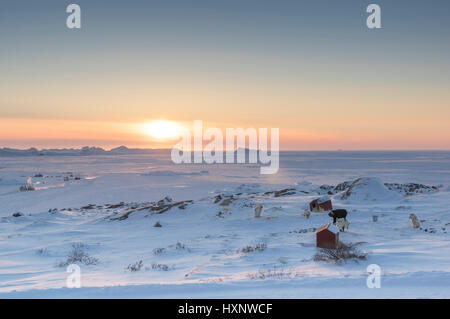 View over the frozen sea in ilulissat Greenland with husky dogs in the foreground - Stock Photo