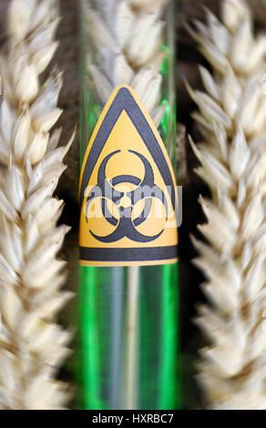 Test tube with biology danger symbol and wheat ear, genetic wheat, Reagenzglas mit Biogefährdung-Symbol und Weizenähre, - Stock Photo