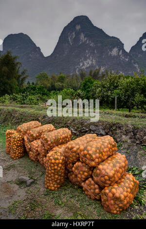 Yangshuo, Guangxi, China - March 29, 2010: Oranges plantations in highlands of rural China, sacks with freshly harvested - Stock Photo