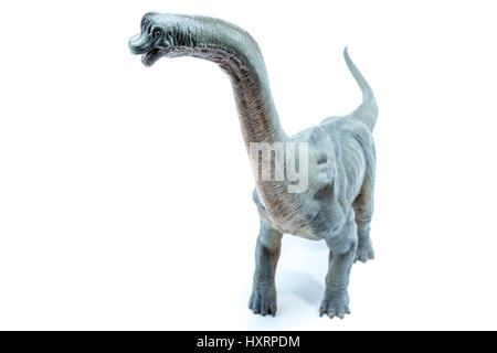 View from the top of Green Brachiosaurus altithorax from the Late Jurassic full body white background - Stock Photo