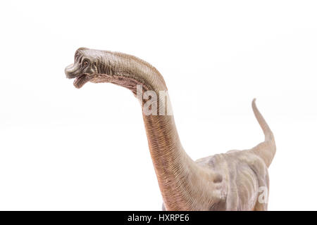 Head and neck close of brown Brachiosaurus altithorax from the Late Jurassic full body white background - Stock Photo