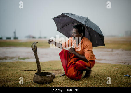 A snake charmer in Colombo, Sri Lanka waiting to entertain passers buy for a small fee.  The snake is a cobra. - Stock Photo
