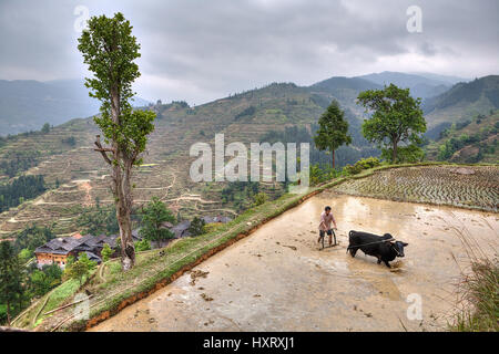 Zhaoxing Dong Village, Guizhou Province, China -  April 9, 2010: Asian farmer with bull plowing flooded rice fields. - Stock Photo