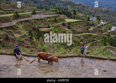 Xijiang, Guizhou Province, China - april 17, 2010: Terraces of rice fields on hillsides, Chinese farmers cultivates - Stock Photo
