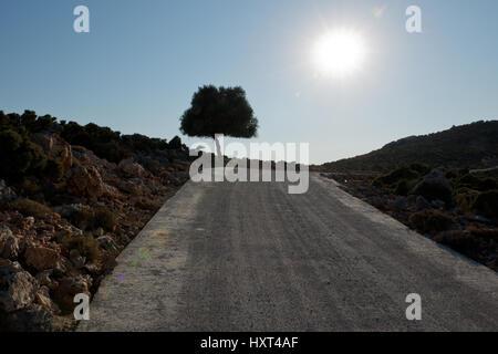 Betonpiste, Straße mit einzelnem Baum und gleißender Sonne in starkem Kontrast, Insel Kastellorizo, Dodekanes, Griechenland - Stock Photo
