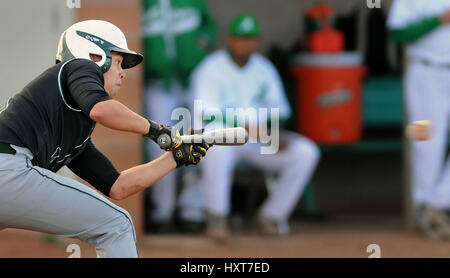 Albuquerque, NM, USA. 29th Mar, 2017. Hope's #1 Ty Fickel prepares to bunt the ball in their game against Albuquerque - Stock Photo