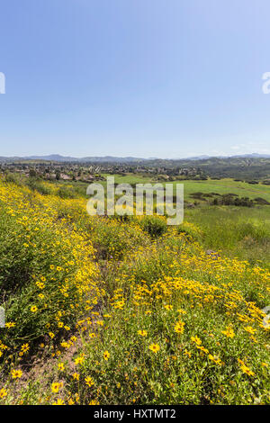 Spring meadow in Wildwood Regional Park in the Thousand Oaks community of Ventura County, California. - Stock Photo