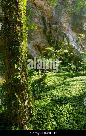 Forest in Baldellou, Huesca, Aragon, Spain. - Stock Photo