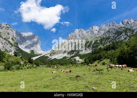 Idyllic mountain landscape with cows in the alps. Austria, Kaiser Mountains, Tyrol - Stock Photo
