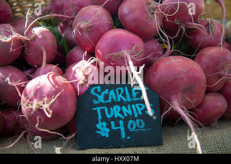 Turnips for sale at the Forsyth farmers market in Savannah Georgia. - Stock Photo