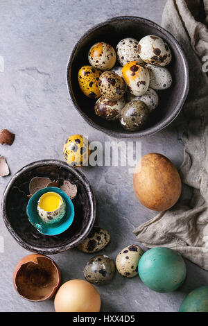 Colored Easter blue brown chicken and quail eggs, whole and broken with yolk in shell in spotted plate and black - Stock Photo