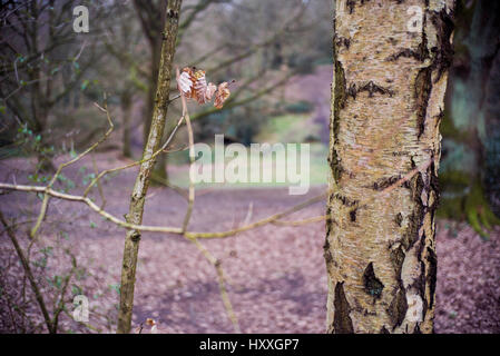 tree in parkland rust coloured leef - Stock Photo