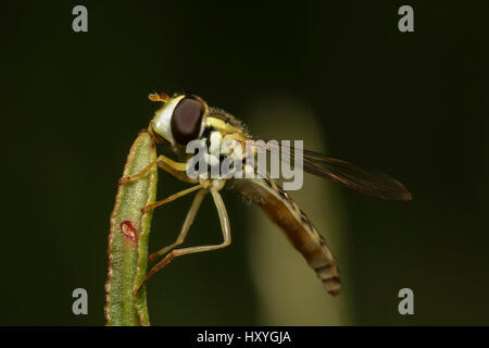 Fly sitting on green grass bushes in a meadow, close-up - Stock Photo