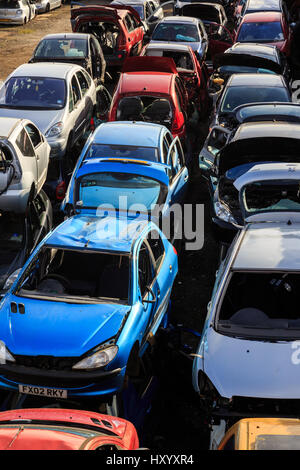 GRIMSBY, ENGLAND - MARCH 14: Blue, red and various colourful cars in scrap yard. In Grimsby, North Lincolnshire, - Stock Photo
